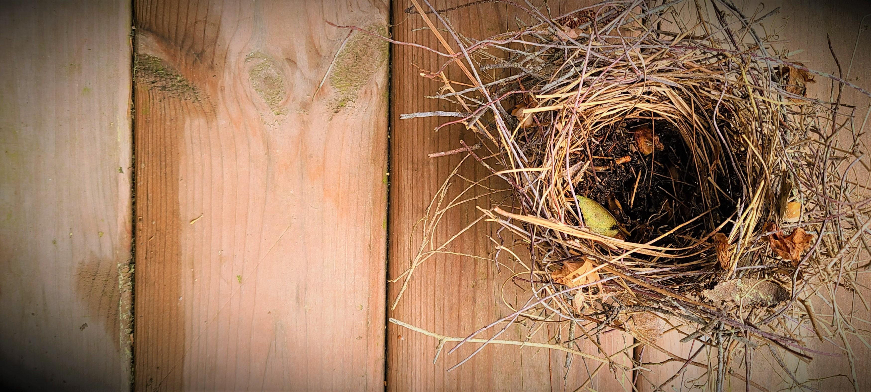 Empty Nest on Wood